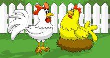 post_3_frango_galinha