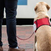 A importância do cão-guia na vidas pessoas com deficiência